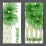 Banners with palms leaves. Decorative image tropical leaf of palm tree Livistona Rotundifolia. Image for holiday Royalty Free Stock Photos
