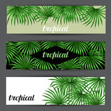 Banners with palms leaves. Decorative image tropical leaf of palm tree Livistona Rotundifolia. Image for holiday Stock Images