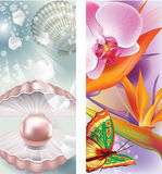 Banners with pearl and flowers Royalty Free Stock Image