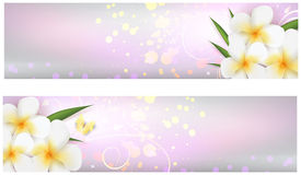 Banners with plumeria flowers Royalty Free Stock Photo