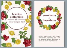 Banners with ripe berries of gooseberries and lingonberries. Vector illustration. Vertical vector banners with fruits of berries and leaves of cowberry and Stock Images