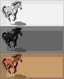 Banners with running horse Royalty Free Stock Photo
