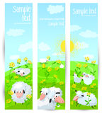 Banners with sheeps Stock Photo