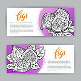 Banners of sketch delicious figs Royalty Free Stock Photos