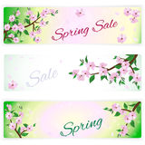 Banners with spring flowering branches of trees Royalty Free Stock Image