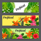 Banners with stylized tropical plants, leaves and flowers. I Stock Photography