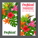 Banners with stylized tropical plants, leaves and flowers.  Stock Photo