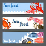 Banners with various seafood. Illustration of fish, shellfish and crustaceans.  Royalty Free Stock Image