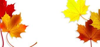 Bannière avec Autumn Maple Leaves coloré illustration libre de droits