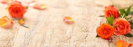Bannière avec les roses de corail Image stock