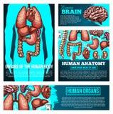 Bannière d'anatomie de corps humain avec l'organe, croquis d'os illustration stock