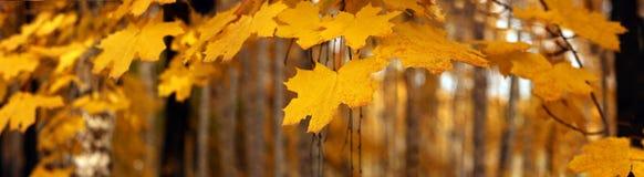 Bannière d'automne Photo libre de droits
