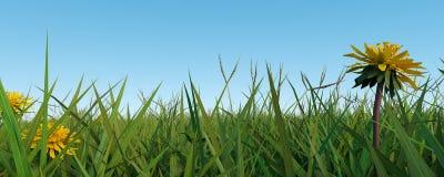 Bannière d'herbe Image stock