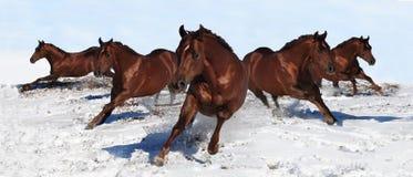 Bannière de cheval Photo stock