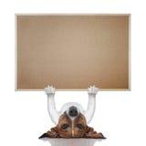 Bannière de chien Photos libres de droits