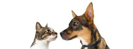 Bannière de chien et de Cat Looking At Each Other Photographie stock