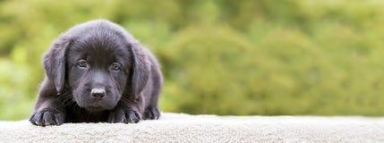 Bannière de chiot de chien Images libres de droits