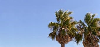 Bannière de ciel bleu avec des couples des arbres de plam Photos stock