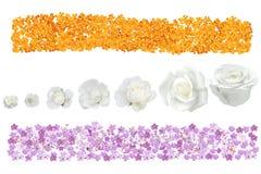 Bannière de fleur photographie stock