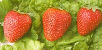 Bannière de fraises Photos libres de droits