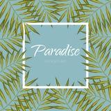 Bannière de palmier Aloha fond exotique de cadre Feuilles de vecteur de paradis Image stock