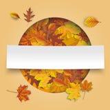Bannière de papier d'Autumn Cover Hole Foliage White Image libre de droits