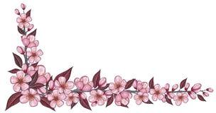 Bannière de ressort avec le dessin de fleur de cerise d'isolement sur le blanc Image libre de droits