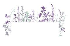Bannière de vecteur avec le timbre d'encre des herbes image libre de droits