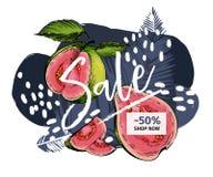 Bannière de vecteur pour le site Web de boutique Vente d'été Goyave tirée par la main d'american national standard de palmette à  Images stock