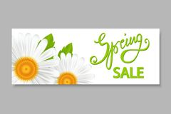 Bannière de vente de ressort, avec des camomilles Images stock