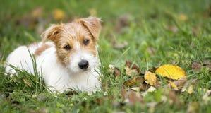 Bannière de Web d'un chiot heureux mignon de chien photos stock