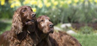 Bannière drôle de chiens photos stock