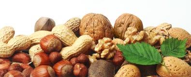 Bannière horizontale nuts fraîche assortie Image libre de droits