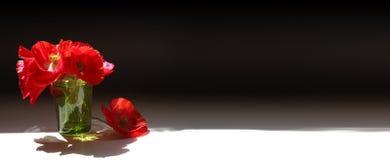 Bannière rouge de pavots Images stock
