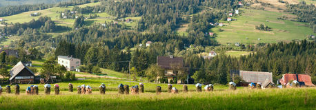 Bannière rurale de paysage d'été, panorama - piles de foin fauché dans la perspective des montagnes Carpathiens occidentaux Photos stock