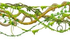 Bannière sauvage tordue de branches de lianes illustration libre de droits