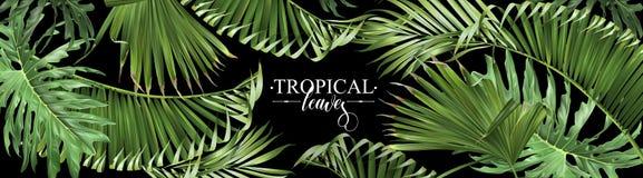 Bannière tropicale de Web de feuilles illustration stock