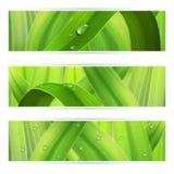 Bannières avec l'herbe Image libre de droits
