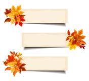 Bannières beiges de vecteur avec les feuilles d'automne colorées Images stock