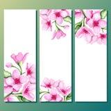 Bannières de cerise de fleur réglées Photo stock