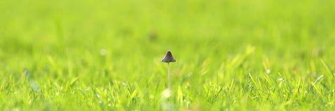 Bannières de Web, champignon sur l'herbe Image stock