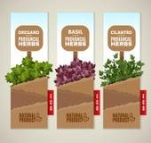 Bannières des herbes De Provence Image stock