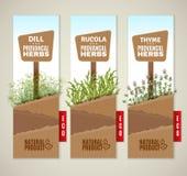 Bannières des herbes De Provence Photos stock