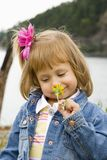 Bannie Smelling Yellowa Flower Royalty Free Stock Photography