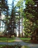 Banor till och med frodig vårskog Royaltyfri Foto