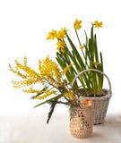 Banque de branche de mimosa et jonquilles jaunes dans un panier blanc Photo stock
