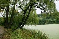 Banque marécageuse de la rivière Images stock