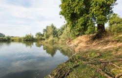 Banques d'un étang naturel en été images stock