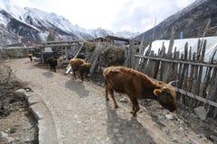 Banques de Ranwuhu des personnes tibétaines Photo libre de droits