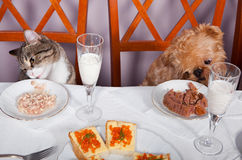 Banquet for the animals. Cat and a dog sitting at a table in the banquet Royalty Free Stock Images
